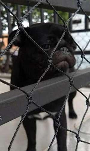 Rede de proteção para cachorro