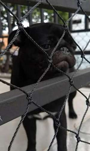 Rede de proteção para cachorros